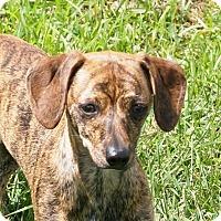 Adopt A Pet :: Boone - Prole, IA