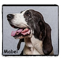Hound (Unknown Type) Mix Dog for adoption in Warren, Pennsylvania - Mabel