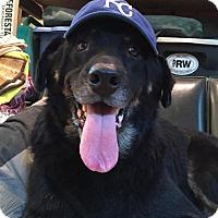 Adopt A Pet :: Mumford - Saratoga, NY
