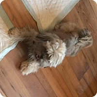 Adopt A Pet :: Pepper - Homer Glen, IL