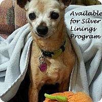 Adopt A Pet :: Esther - San Diego, CA