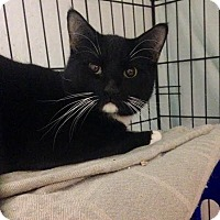 Adopt A Pet :: Bamboo - East Brunswick, NJ