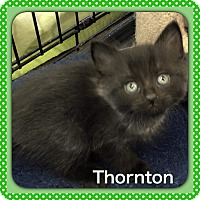 Adopt A Pet :: Thornton - Atco, NJ