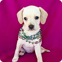 Adopt A Pet :: Juliet - Irvine, CA