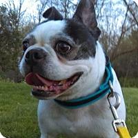 Adopt A Pet :: Corky - Nashville, TN