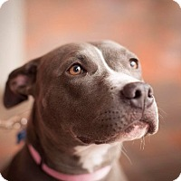 Adopt A Pet :: Xena - Boston, MA