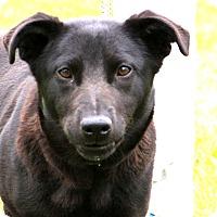 Adopt A Pet :: Shadow~meet me~ - Glastonbury, CT