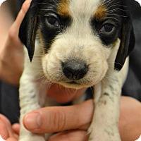 Adopt A Pet :: Hugo - Lake Odessa, MI