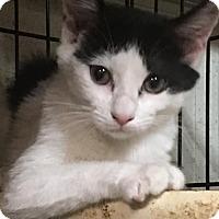 Adopt A Pet :: Suzie Marie - Seminole, FL