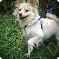 Adopt A Pet :: Taffy - Memphis, TN