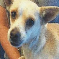 Adopt A Pet :: PAULY - Longview, WA
