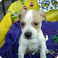 Adopt A Pet :: Cajun - Des Moines, IA