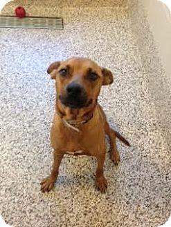 Retriever (Unknown Type) Mix Dog for adoption in Aiken, South Carolina - Bella