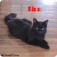 Adopt A Pet :: Finn - Extremely Playful! - Huntsville, ON