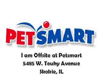 Siamese Cat for adoption in Chicago Ridge, Illinois - BANDIT