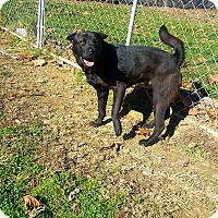 Adopt A Pet :: Gobbler - Fairmont, WV