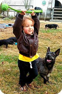 Dutch Shepherd/Shepherd (Unknown Type) Mix Dog for adoption in Alexandria, Virginia - Uncle Vinny