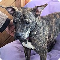 Adopt A Pet :: Zena - Petersburg, VA