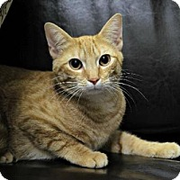 Adopt A Pet :: Clarence - Seattle, WA