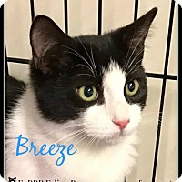 Adopt A Pet :: Breeze - Gonic, NH