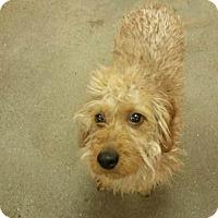 Adopt A Pet :: Tucker - Willingboro, NJ