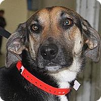 Adopt A Pet :: Toby - Orange Cove, CA
