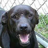 Adopt A Pet :: AA-Harrison - Tyler, TX