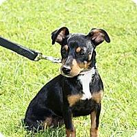 Adopt A Pet :: BB - Phoenix, AZ