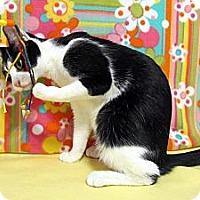 Adopt A Pet :: Juneaux - Orlando, FL