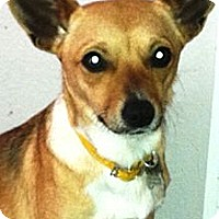 Adopt A Pet :: LADY- ADOPTED!! - Brooksville, FL
