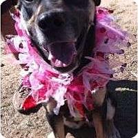 Adopt A Pet :: Kyla - Scottsdale, AZ