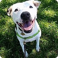 Adopt A Pet :: Cypress - $100 ADOPTION GRANT! - Auburn, CA