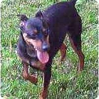 Adopt A Pet :: Dillon - Florissant, MO