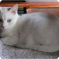 Adopt A Pet :: LG - Monroe, GA