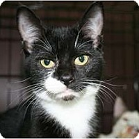 Adopt A Pet :: Dinky - Frederick, MD