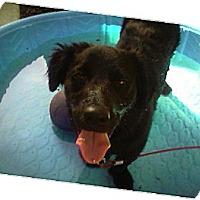 Adopt A Pet :: Max - Costa Mesa, CA