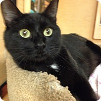 Adopt A Pet :: Nala - Foothill Ranch, CA