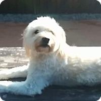 Adopt A Pet :: Haiku - Vaudreuil-Dorion, QC