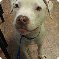 Adopt A Pet :: SCRAPPY - levittown, NY