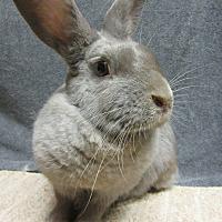 Adopt A Pet :: Justine - Newport, DE