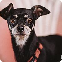 Adopt A Pet :: Flaquiz - Portland, OR