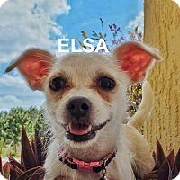 Adopt A Pet :: Elsa - Tavares, FL