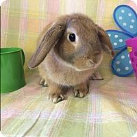 Adopt A Pet :: Cooper - Paramount, CA