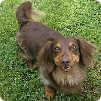 Adopt A Pet :: Moose - Georgetown, KY