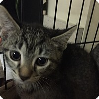 Adopt A Pet :: Coleen - Forest Hills, NY