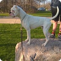 Adopt A Pet :: Gideon - Elyria, OH