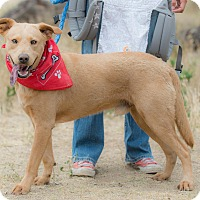 Labrador Retriever Mix Dog for adoption in Santa Monica, California - Gary
