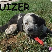 Adopt A Pet :: Bruizer - Batesville, AR