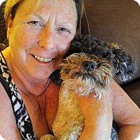 Adopt A Pet :: Leroy Brown - Plain City, OH