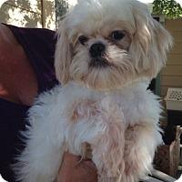 Adopt A Pet :: Petey - Temecula, CA